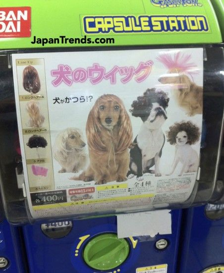 Capsule vending machine containing wigs for dogs